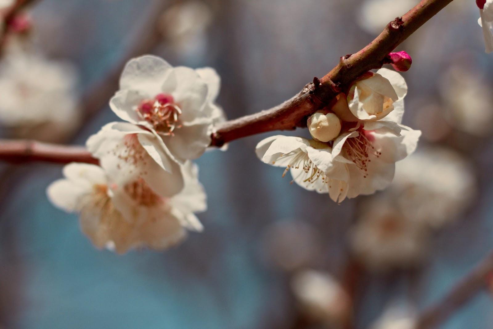 Love Letters to Wuhan - Part VI: Dear Flowers