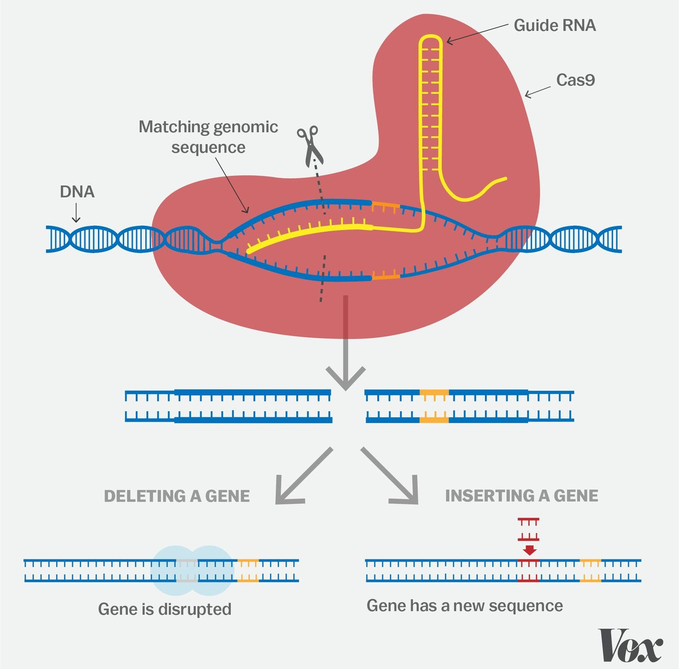 CRISPR, one of the biggest science stories of the decade ...