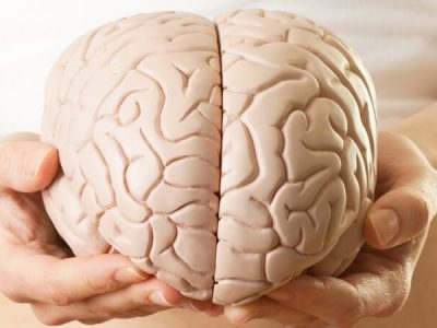 Free Will and the Human Brain