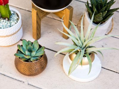 Why You Won't Regret Getting a House Plant