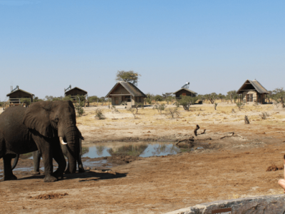 Hitchhiking, Elephants, & Cheesy Quotes