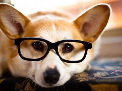 Puppy Love: Introducing a New Breed in Teaching
