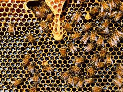 Is Honey Consumption Sustainable?