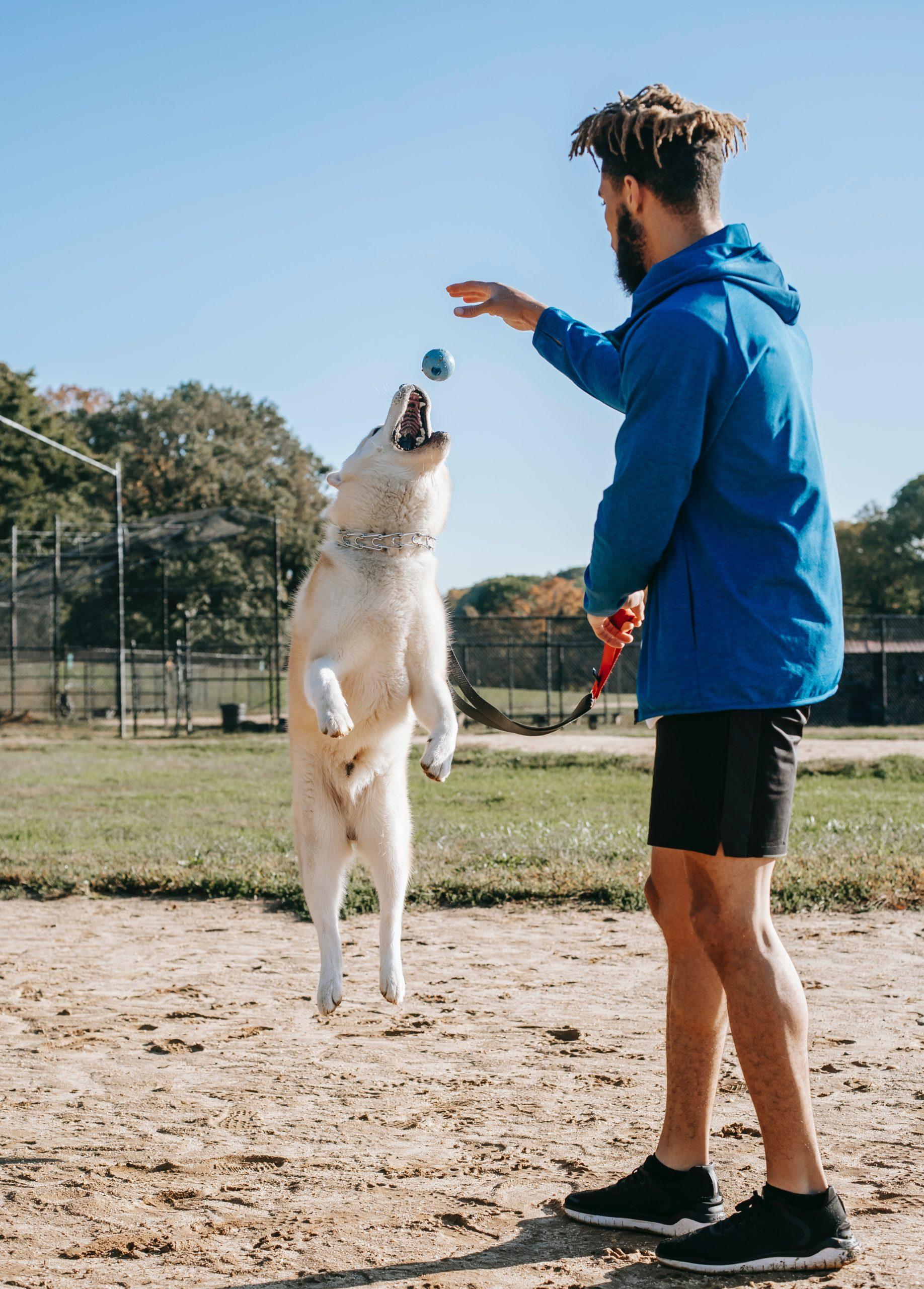 human teaching dog tricks