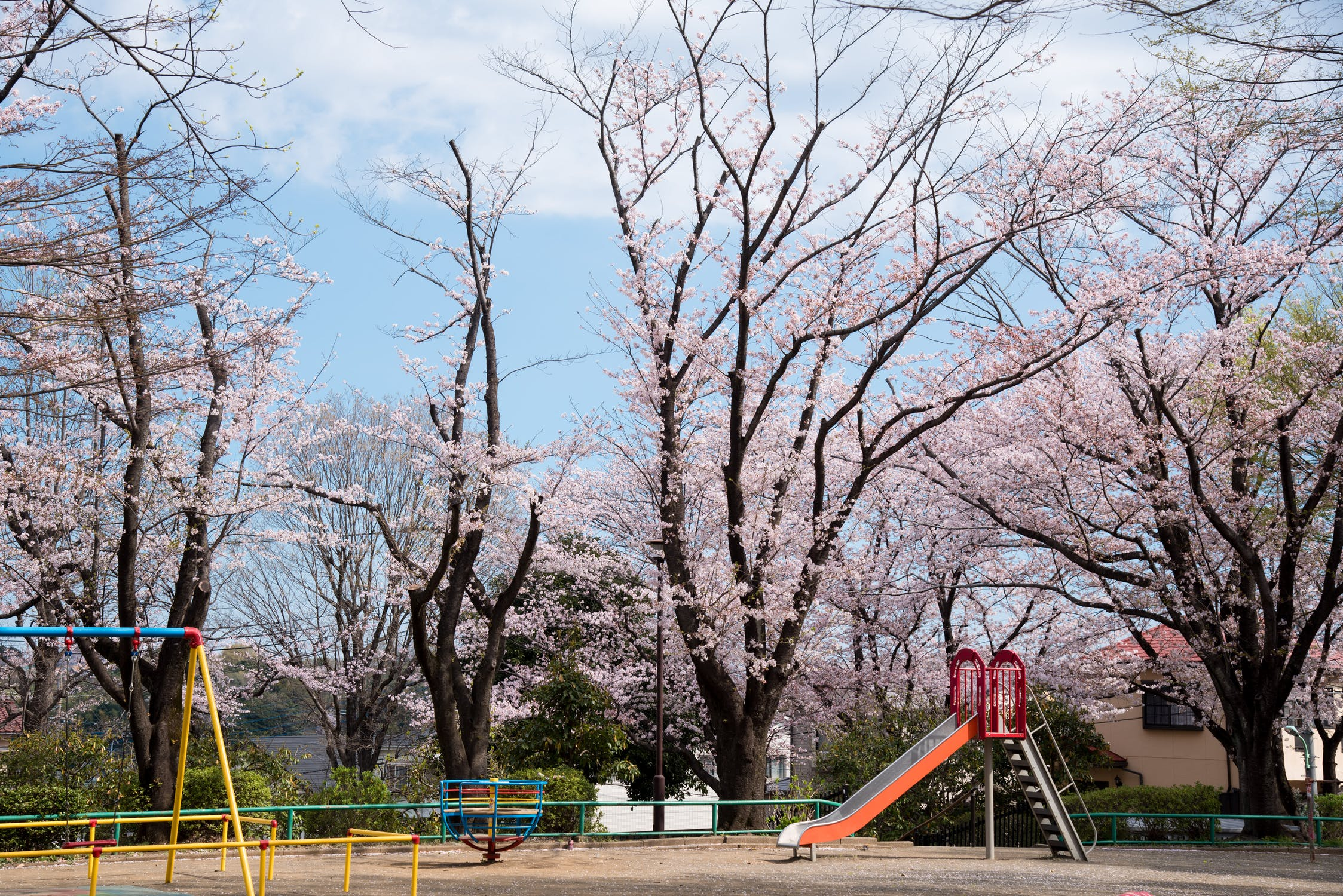 image of the park, playground, and cherry blossom trees