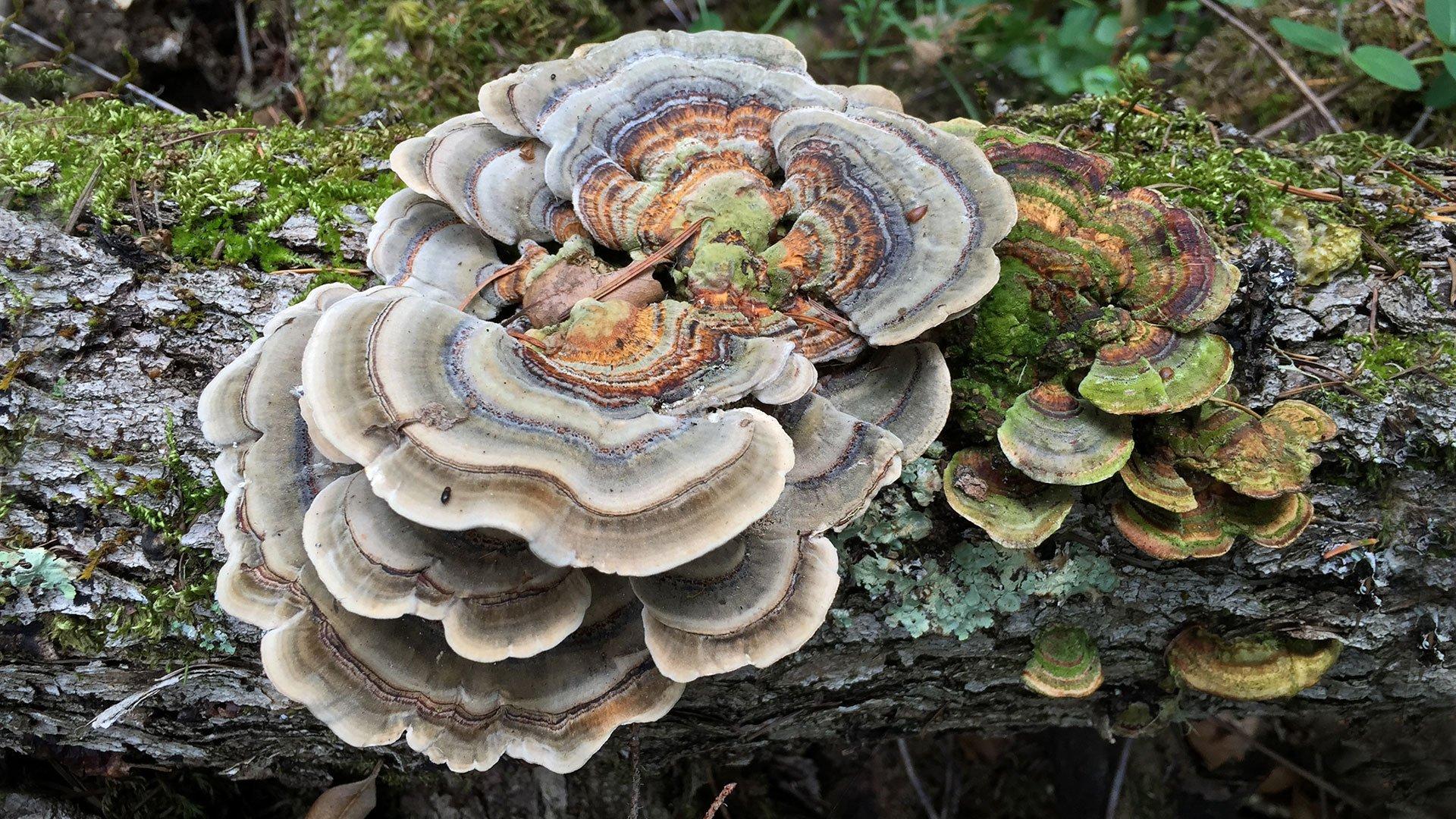 Mushroom and Mycelium